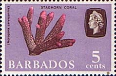 Stamps of Barbados 1966 QE II SG 346 Marine Life Staghorn Coral Fine Mint