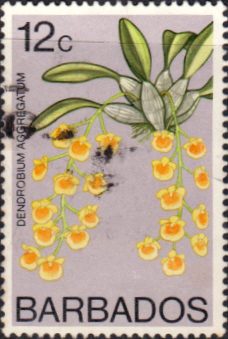 Flower Stamps Barbados 1974 Orchids SG 492 Fine Used Scott 403