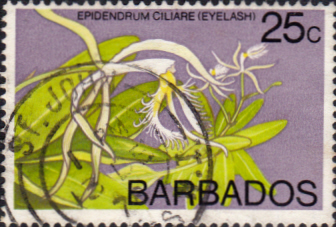 Flower Stamps Barbados 1974 Orchids SG 494 Fine Used Scott 405