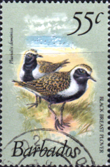 Barbados 1979 Birds SG 633a Fine Used
