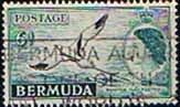 Bermuda 1953 Queen Elizabeth SG 143 White-tailed Tropic Bird Fine Used