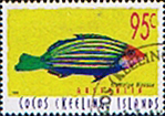 Cocos Keeling Islands 1995 Fishes SG 339a Sixstripe Wrasse Fine Used