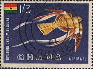 Stamp Stamps Ghana 1959 Birds Air Mail Pennant-winged Nightjar SG226 Fine Used SG 226 Scott C1