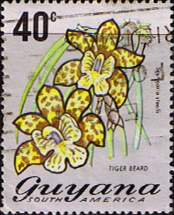 Stamp Guyana 1971 Trees and Blossoms SG 551 Tiger Beard Fine Used Scott 142