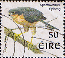 Stamp Stamps Eire Ireland 1997 Birds SG 1058 Fine Used Scott 1110