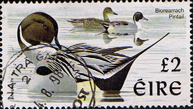 Stamp Stamps Eire Ireland 1997 Birds SG 1061 Fine Used Scott 1111