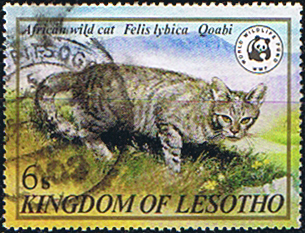 Lesotho 1981 SG 468 Wildlife African Wild Cat Fine Used