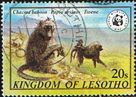 Lesotho 1981 SG 469 Chacma Baboon Fine Used