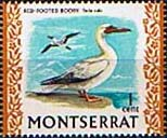 Montserrat 1970 Birds SG 242 Red Footed Booby Fine Mint