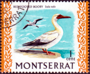 Montserrat 1972 Birds SG 295 Red Footed Booby Fine Used