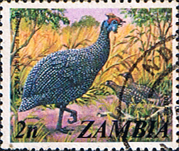 Postage stamps of Zambia 1975 SG 227 Helmet Guineafowl Fine Used Scott 136
