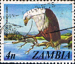 Postage stamps of Zambia 1975 SG 229 African Fish Eagle Fine Used Scott 138