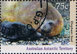 Stamps Australian Antarctic Territory 1992 Wildlife Elephant seal with pup Fine Used SG 91 Scott L84