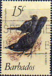 Barbados 1979 Birds SG 627a Fine Used