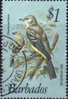 Barbados 1979 Birds SG 635 Fine Used