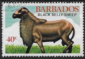 Stamp of Barbados 1982 Black Belly Sheep SG 695 Scott 568