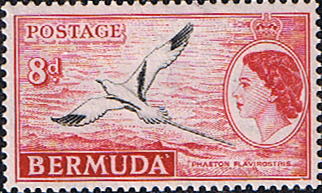 Bermuda 1953 Queen Elizabeth SG 143a White-tailed tropic bird Fine Mint
