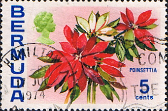 Bermuda 1970 Flowers SG 253 Poinsettia Fine Used