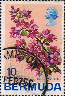 Stamps of Bermuda 1970 Flowers SG 256 Bougainvillea Fine Used SG 256 Scott 262