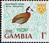 Gambia 1966 Birds SG 234 Fine Mint
