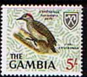 Gambia 1966 Birds SG 243 Fine Mint