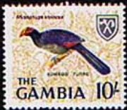 Gambia 1966 Birds SG 244 Fine Mint