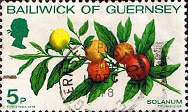 Guernsey 1978 Christmas SG 173 Plants Solanum Fine Used