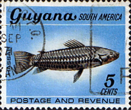 Military Vehicles For Sale Canada >> Postage Stamps Guyana 1968 Fish SG 451 Armoured Catfish Fine Used Scott 42