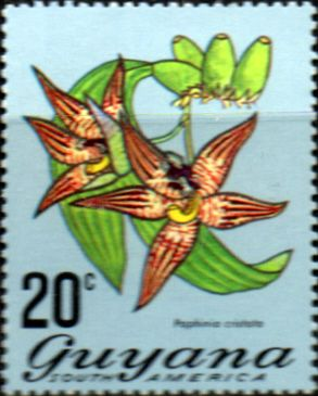 Stamps Stamp Guyana 1971 Trees and Blossoms SG 545 Annotto Tree Fine Used Scott 136