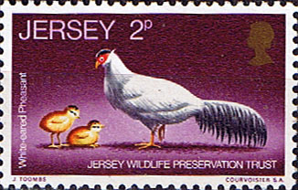 Postage Stamps Stamp Jersey 1971 Wildlife Preservation Trust White Eared Pheasant SG 57 SG 30 Fine Mint SG 49