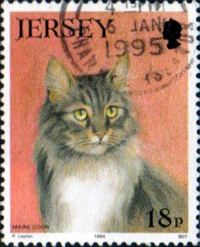 Jersey 1994 Cat Club SG 650 Fine Used