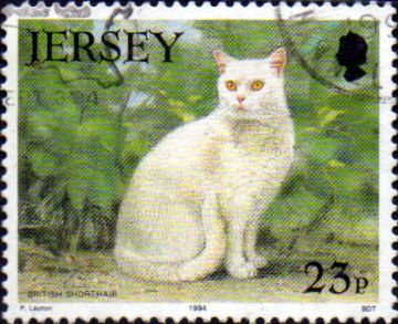 Jersey 1994 Cat Club SG 651 Fine Used
