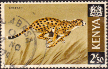 Postage Stamps Kenya 1966 Republic Animals Cheetah SG 32 Fine Used Scott