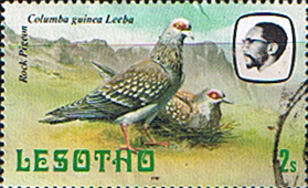 Lesotho 1981 Birds SG 438 Speckled Pigeon Fine Used
