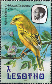 Lesotho 1981 Birds SG 442 Yellow Canary Fine Used