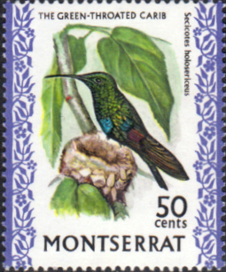 Montserrat 1970 Birds SG 251 Green-throated carib   Fine Mint