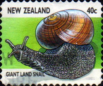 New Zealand 1997 Insects SG 2105 Fine Used
