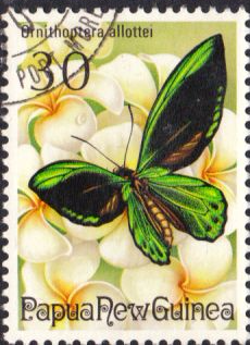 Stamps Papua New Guinea 1975 Fauna Conservation Butterflies Set Fine Used