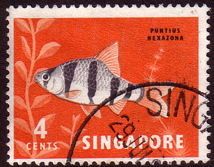 Singapore 1962 SG 65 Tiger Fish Fine Used