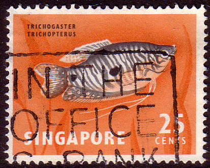 Singapore 1962 SG 72 Three-spotted Goramy Fish Fine Used
