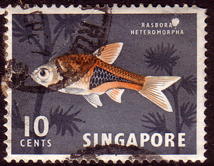 Postage Stamps Singapore 1966 SG 69 Harlequin Fish Fine Used SG 85 Scott 57b