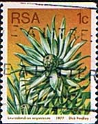 South Africa 1977 Proteas and Succulents Coil Stamps SG 431 Fine Used