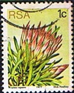 South Africa 1977 Proteas and Succulents SG 414 Fine Used