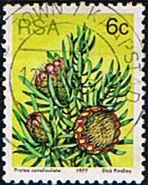 South Africa 1977 Proteas and Succulents SG 419 Fine Used
