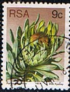 South Africa 1977 Proteas and Succulents SG 422 Fine Used