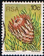 South Africa 1977 Proteas and Succulents SG 423 Fine Used