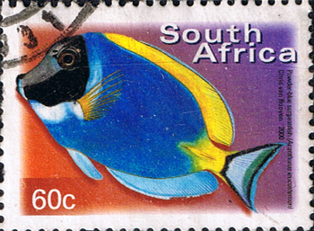 South Africa 2000 Fish SG 1211 Powder-blue surgeonfish Fine Used